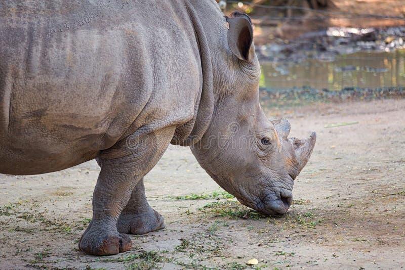 Parque del parque zoológico, Vietnam imagen de archivo libre de regalías