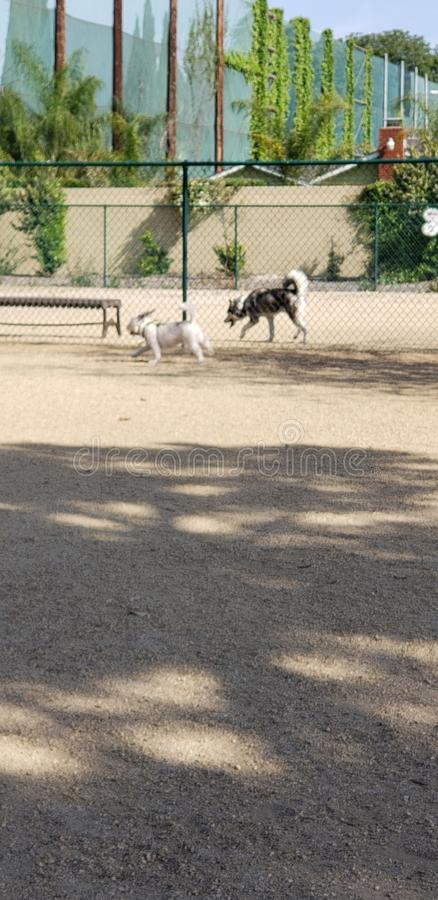 Parque del perro fotografía de archivo libre de regalías