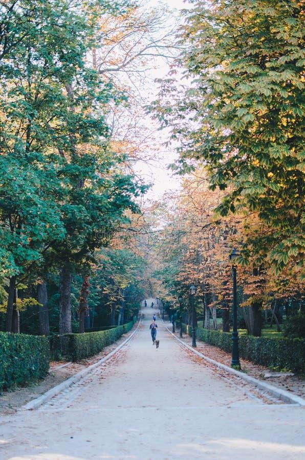 Parque del Retiro, Madrid foto de stock royalty free