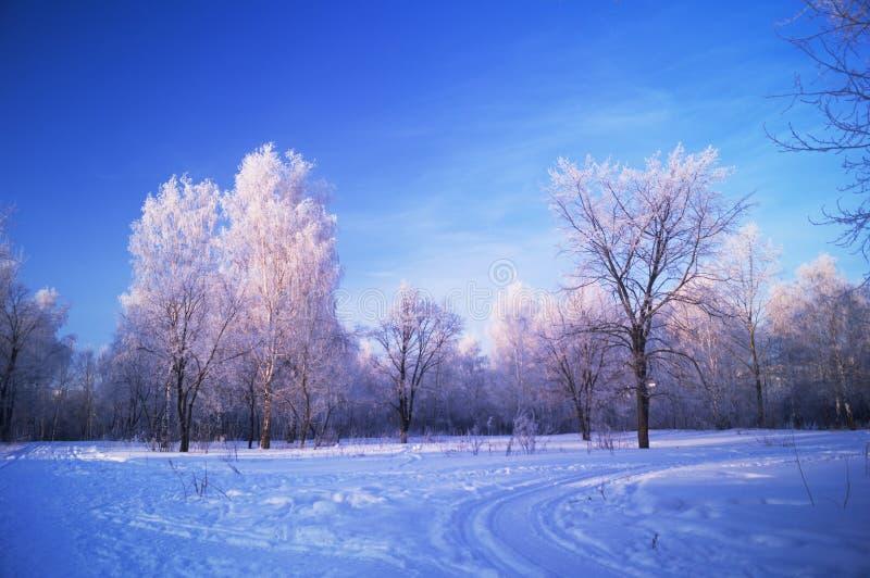 Parque del ruso del invierno foto de archivo libre de regalías