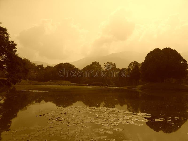 Parque del verano foto de archivo