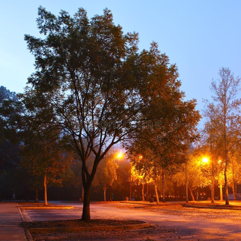 Download Parque do amanhecer foto de stock. Imagem de brilhante - 29838962