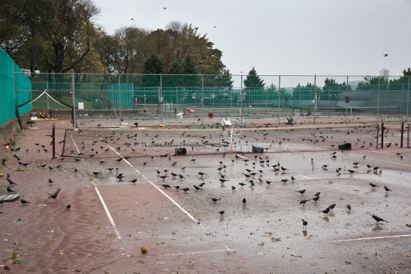 Parque Do Beira-rio Após O Furacão Sandy Foto Editorial