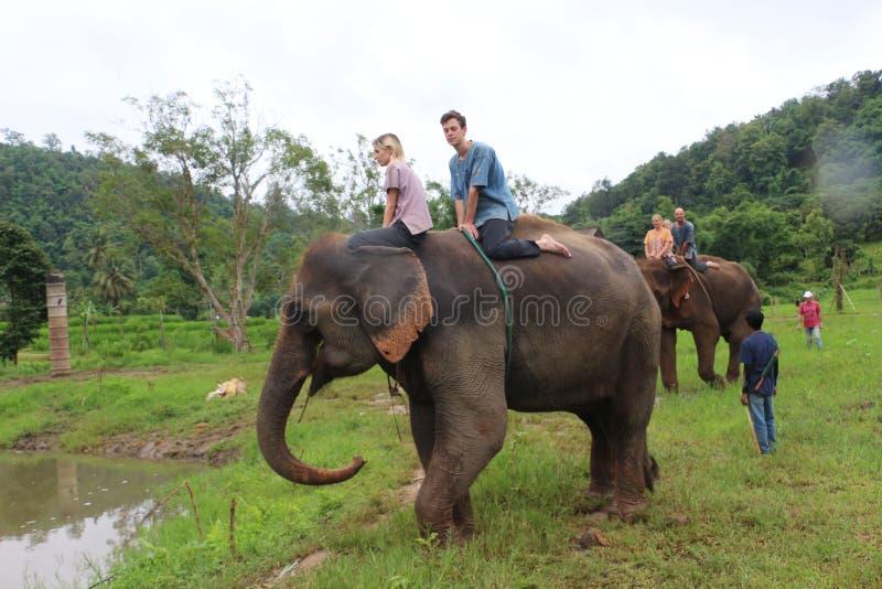 Parque do elefante fotografia de stock royalty free