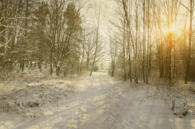 Parque do inverno com fulgor do por do sol imagens de stock