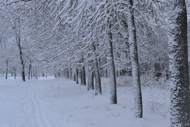Parque do inverno em uma geada forte coberta com a neve imagem de stock