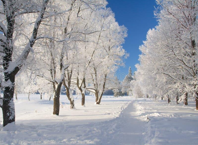 Parque do inverno na neve fotografia de stock