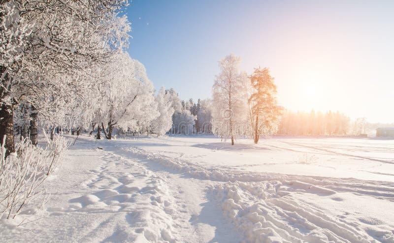 Parque do inverno na neve imagem de stock royalty free