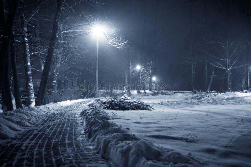 Parque do inverno na noite. imagens de stock royalty free