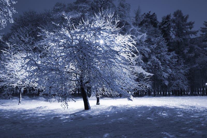 Parque do inverno na noite imagens de stock