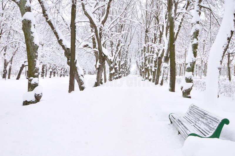 Parque do inverno, Pavlovsk, St Petersburg, Rússia fotografia de stock