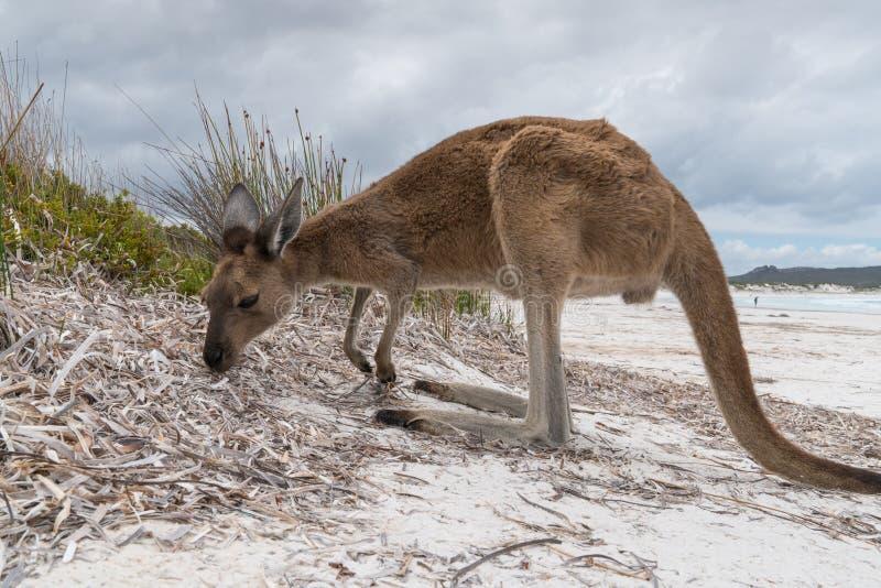 Parque do Le Grand National do cabo, Austrália Ocidental foto de stock