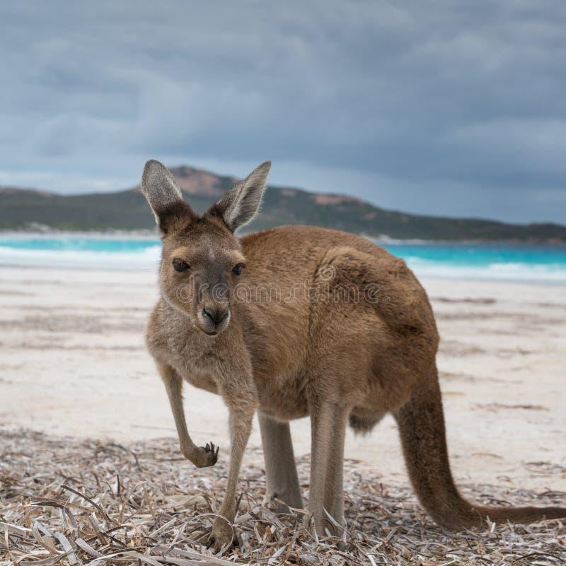 Parque do Le Grand National do cabo, Austrália Ocidental foto de stock royalty free