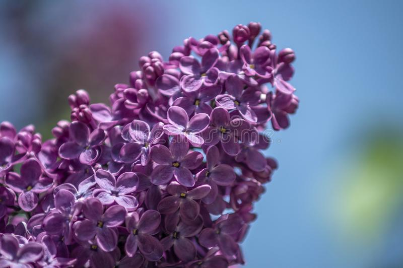 Parque do lil?s na primavera fotos de stock royalty free