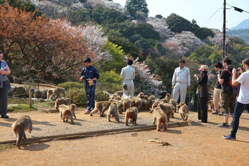 Parque do macaco de Iwatayama fotografia de stock royalty free
