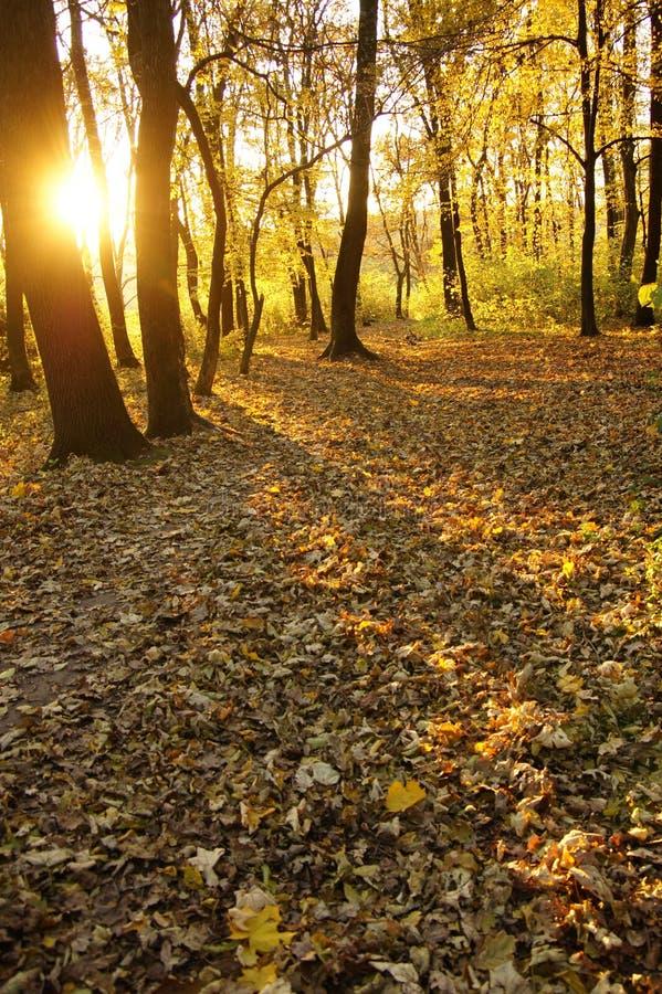 Download Parque do outono imagem de stock. Imagem de terra, calor - 16859823