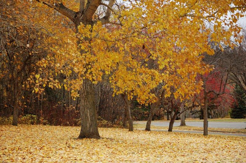Parque do outono imagem de stock