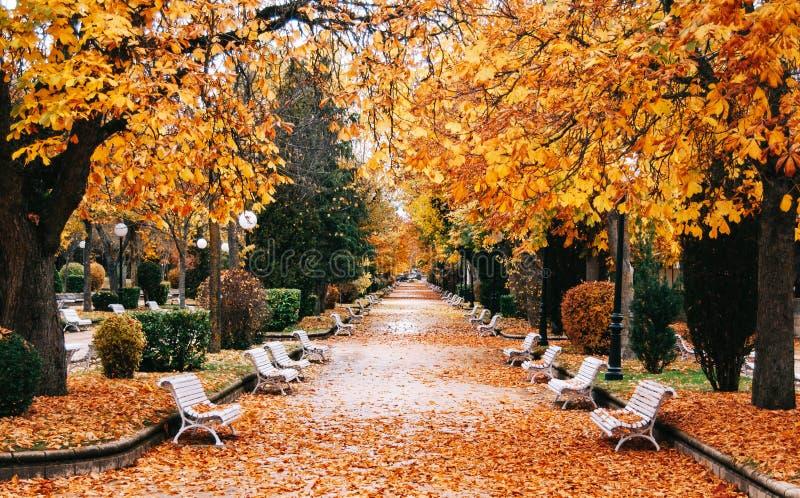 Parque do outono com árvores douradas imagens de stock royalty free