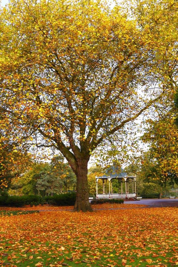 Parque do outono e carrinho de faixa imagens de stock royalty free