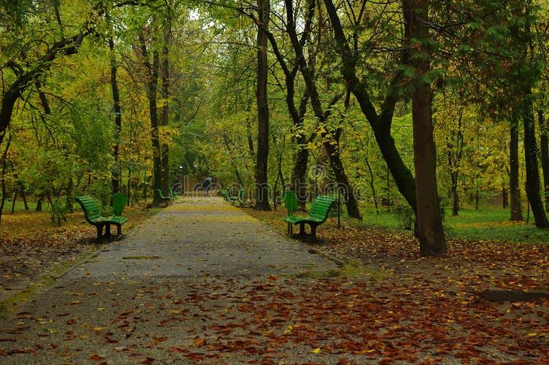 Parque do outono na chuva imagens de stock