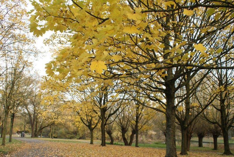 Parque do outono no dia ensolarado imagens de stock royalty free