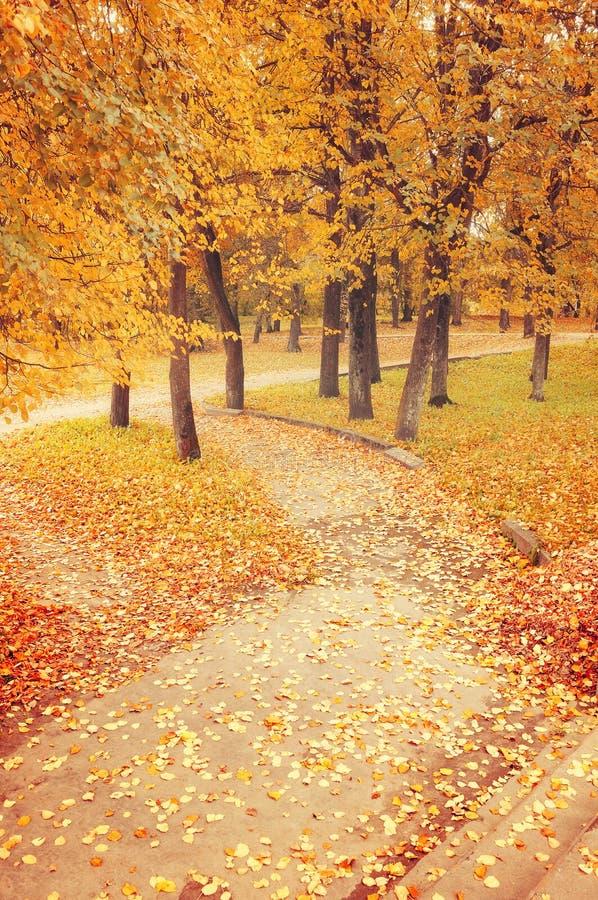 Parque do outono no tempo nevoento - paisagem bonita do outono fotos de stock royalty free