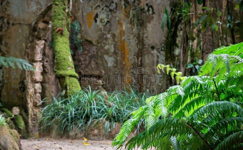 Parque do palácio de Monserrate, Sintra, Portugal imagem de stock