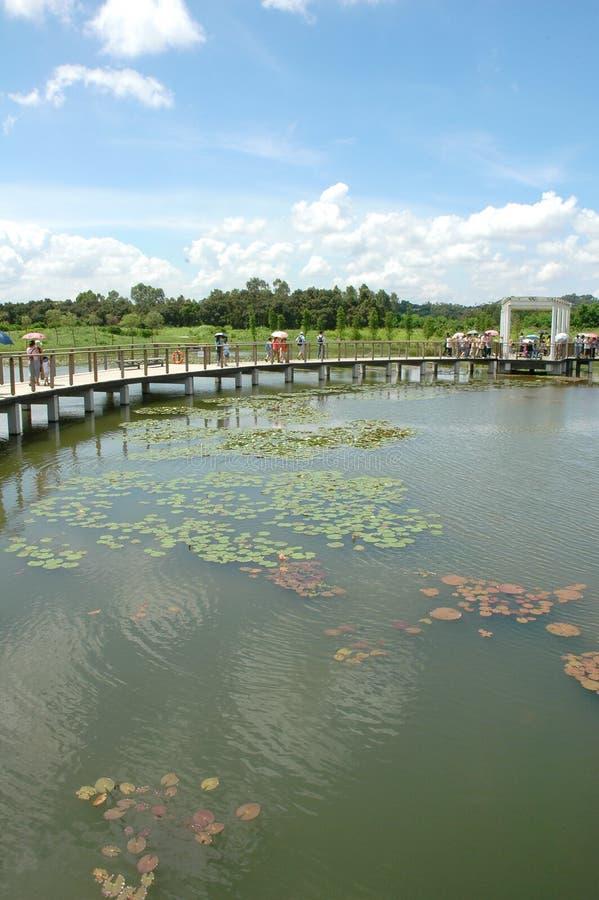 Parque do pantanal fotografia de stock royalty free