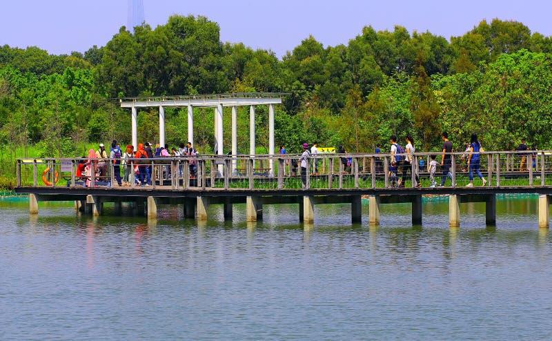 Parque do pantanal, Hong Kong foto de stock royalty free
