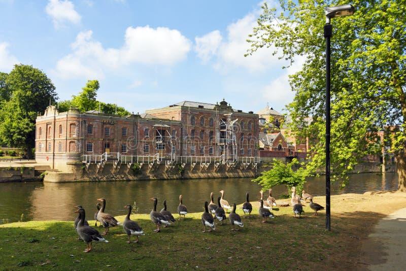 Parque do rio em York imagem de stock royalty free