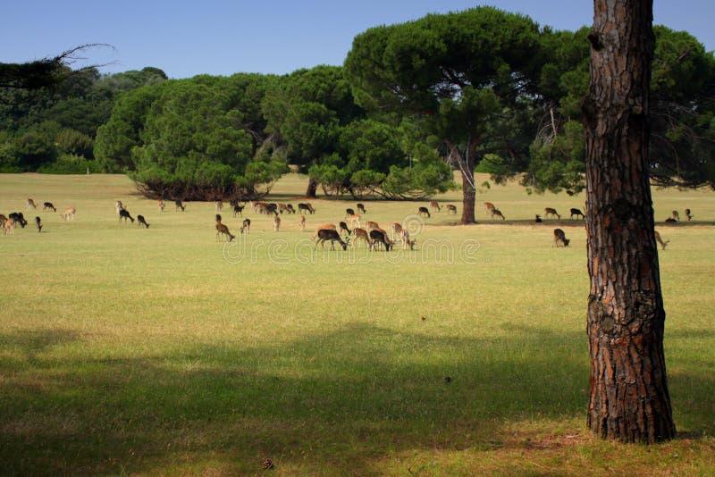 Parque do safari foto de stock royalty free
