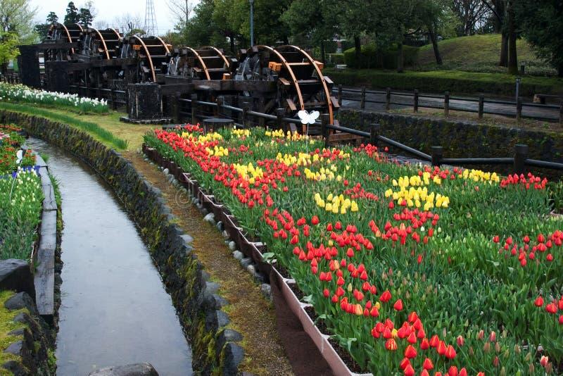 Parque do Tulip de Tonami, Japão imagem de stock