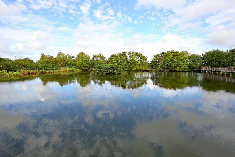 Parque dos pantanais de Wakodahatchee, um lugar birding fotografia de stock royalty free