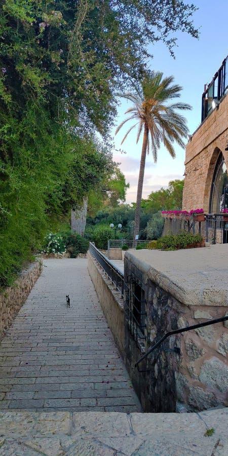 Parque e um gato em Tel Aviv foto de stock