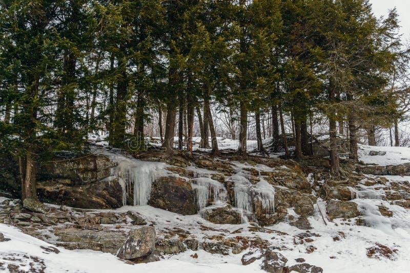 Parque en el invierno (parque de Omega de Quebec) imágenes de archivo libres de regalías
