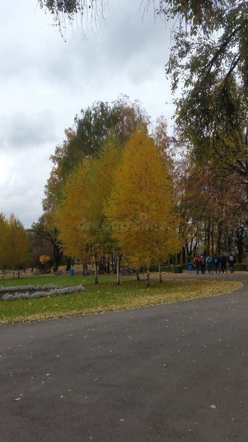 Parque en otoño imagen de archivo