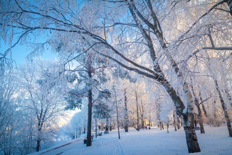 Parque en un día escarchado claro - invierno mágico del invierno foto de archivo libre de regalías