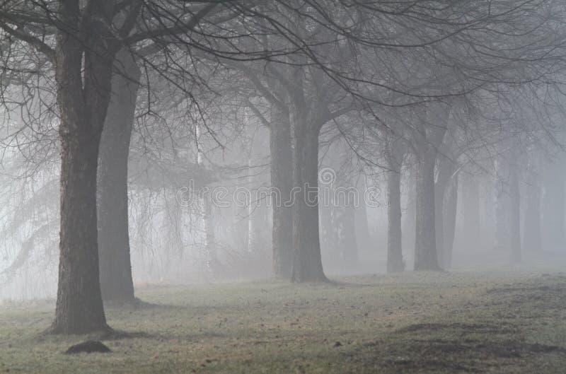 Parque enevoado com árvores desencapadas fotos de stock