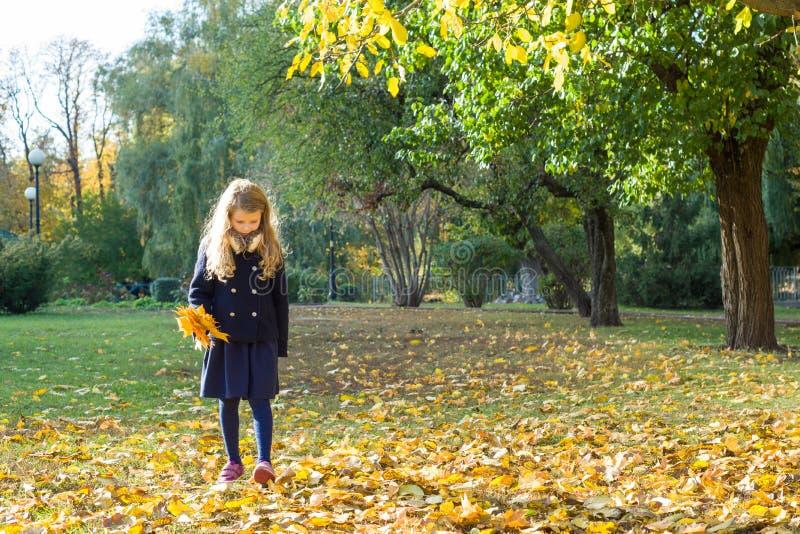 Parque ensolarado do outono, menina com um ramalhete das folhas de bordo amarelas, espaço da cópia imagem de stock royalty free
