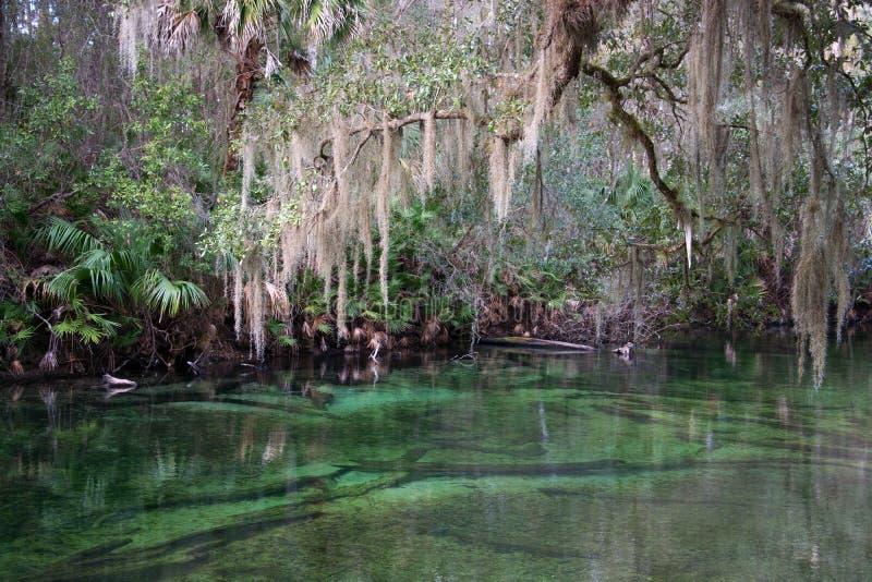 Parque estadual azul da mola, Florida, EUA fotografia de stock