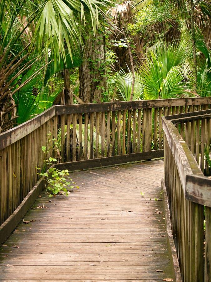 Parque estadual no coração de Florida central imagem de stock
