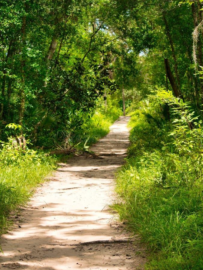 Parque estadual no coração de Florida central foto de stock