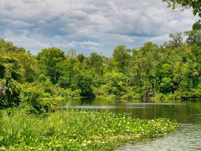 Parque estadual no coração de Florida central fotografia de stock royalty free