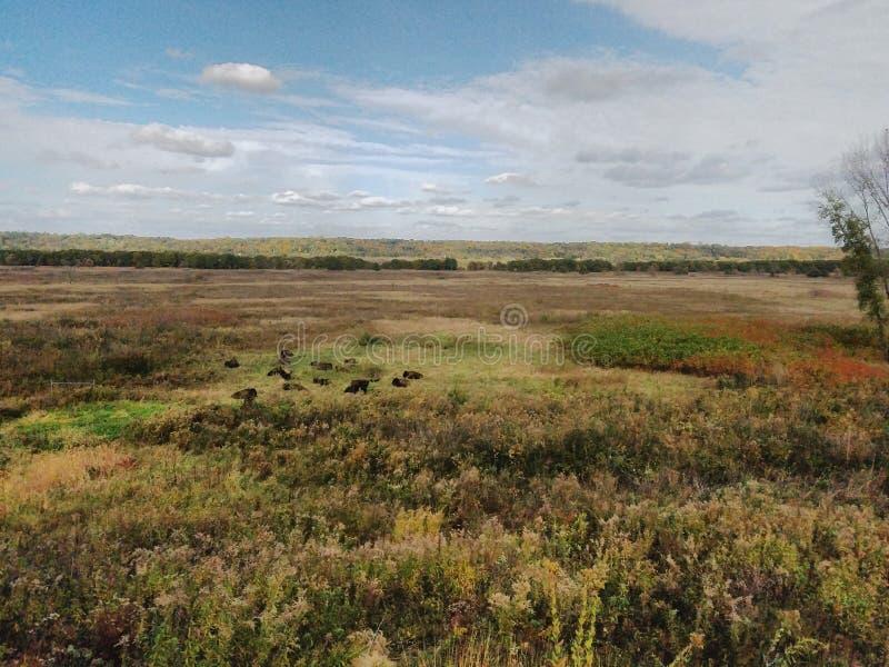 Parque Estatal Minneopa, Mankato, Minnesota foto de archivo libre de regalías