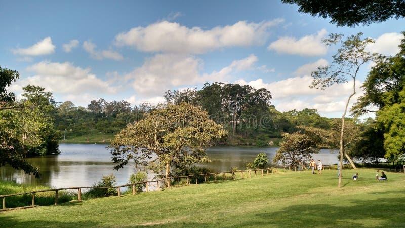 Parque gör Carmo - Sao Paulo, Brasilien royaltyfri bild
