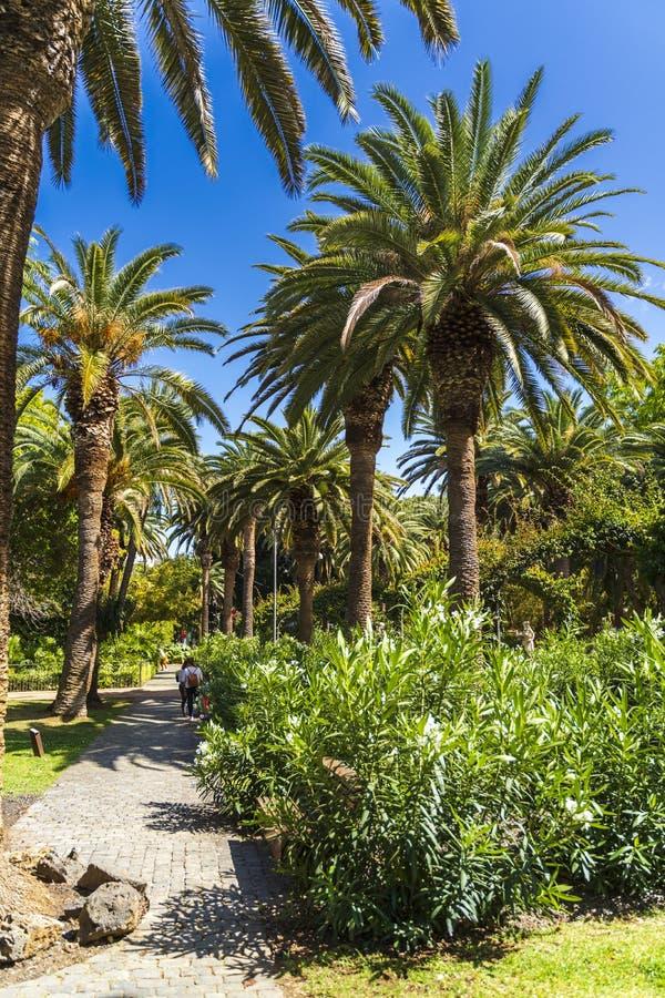 Parque Garcia Sanabria i Santa Cruz de Tenerife royaltyfri fotografi