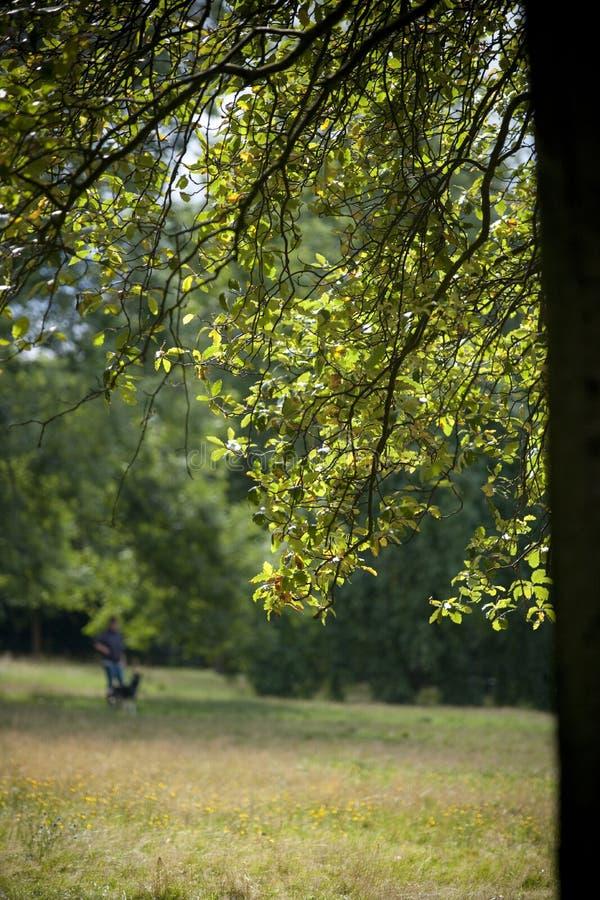 Parque, Glasgow, Esc?cia, Reino Unido, em setembro de 2013, parkland e ?rvores de Kelvingrove no parque de Kelvingrove foto de stock