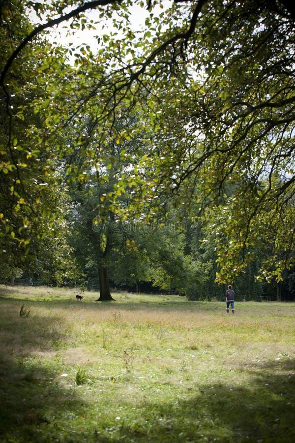 Parque, Glasgow, Esc?cia, Reino Unido, em setembro de 2013, parkland e ?rvores de Kelvingrove no parque de Kelvingrove imagens de stock