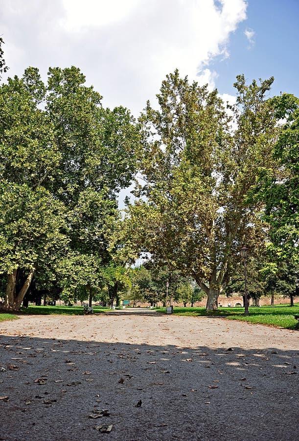 Parque grande de la ciudad foto de archivo