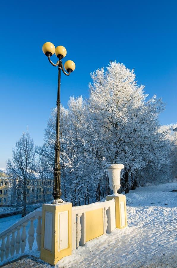 parque hermoso de la ciudad con los árboles cubiertos con escarcha foto de archivo libre de regalías